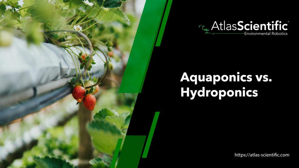 aquaponics-vs-hydroponics