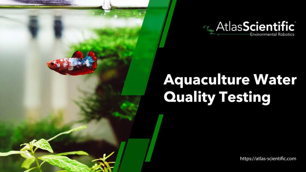 how-to-raise-ph-in-aquarium