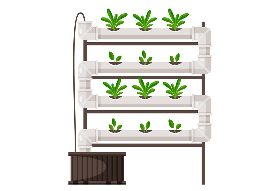 Aquaponics vs Hydroponics: How to Pick the Best Approach