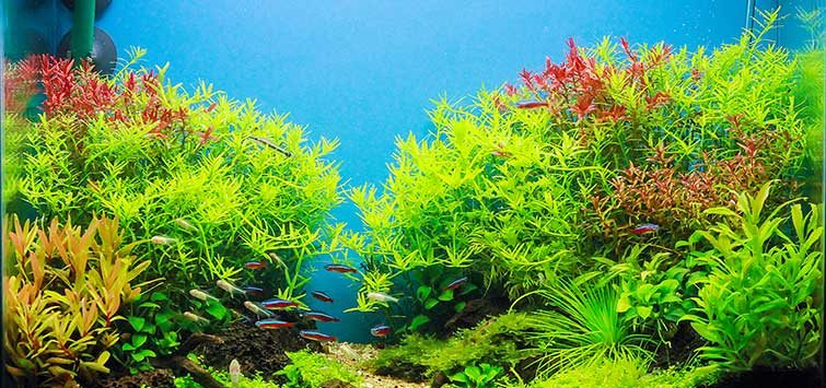 How to Safely Raise the pH in an Aquarium